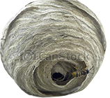 London Wasp Nest Removal Specialists